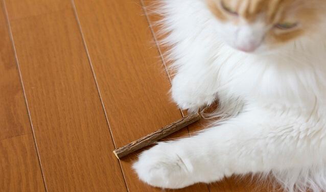 猫 またたび